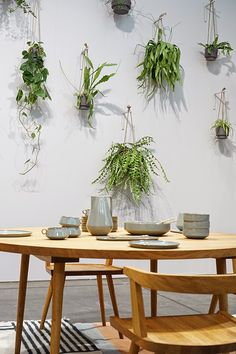 Plant hangers on wall; like this for a sunny bathroom. White and concrete tiles, glass stall, ferns and succulents