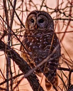 It is hard to sneak up on an owl. They can turn their heads 270 deg, so they keep both eyes on you even when you are behind them.