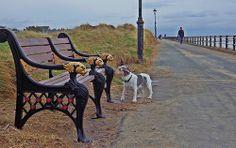 lytham st annes Blackpool Pleasure Beach, St Anne, My Heritage, Great Places, Childhood Memories, Wales, Scotland, Ireland, Saints