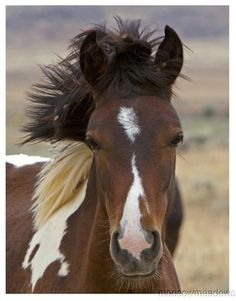New Brown Wild Mustang Horse Print Southwestern Plaque Western Sign 8x10 Picture | eBay
