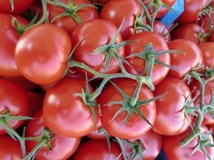 Health Benefit of Tomato   Tomato. Fruit without knowing this season turned out contain a variety of nutrients that are beneficial to health. Diverse studies have shown tomato beneficial for heart health as well as free-radical scavengers.