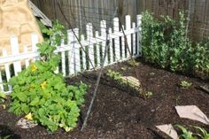Recycled air conditioner guard makes a great trellis to grow squash or cucumber on and lettuce and spinach underneath. #recycle #garden #backyard #food #trellis