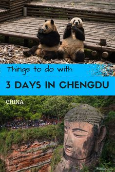 From the pandas to the giant Buddha here are the best things to do in Chengdu in 3 days. China Travel Guide, Asia Travel, Wanderlust Travel, Travel Tips, Travel Hacks, Travel Guides, Oh The Places You'll Go, Places To Travel, Travel Destinations