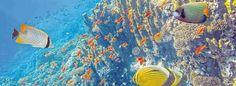 Paradies unter Wasser - Taucherurlaub auf den Molukken