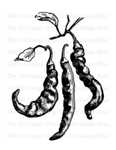 Chili Pepper Printable Clip Art Illustration Digital Download