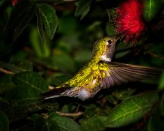 Hummingbirds rock!