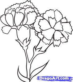 how to draw carnations step 6