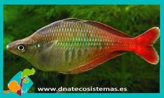 Fish & Aquariums 2019 Latest Design Comida Bloque Fin De Semana Peces Tropicales Acuario Dulce Pecera Alimento Making Things Convenient For The People