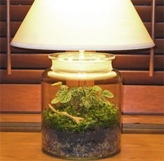 """For as long as I can remember I have always had a fascination with terrariums. I am starting to see them more and more and since I am so """"over"""" silk arrangements, this is a great alternative, it's """"live"""", """"green"""" and super easy to keep alive. I love the use of apothecary jars by SmithandHawken. …"""