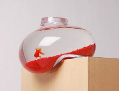 My cats would definitely knock this #aquarium down in a matter of seconds.