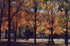 Belvidere Park