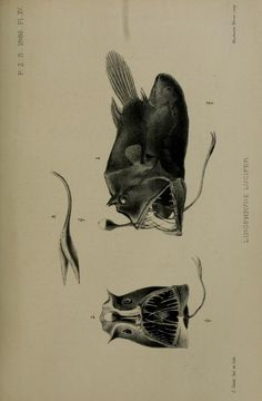 Proceedings of the Zoological Society of London, 1886.