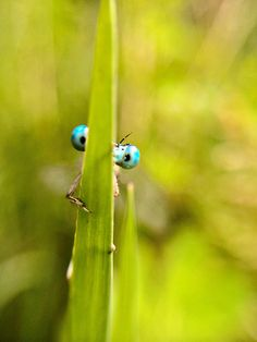 Macro & Details: Estas Ahi? by Unai Momoitio from Mobile Photography Awards 2014 Announces Stunning Winning Images