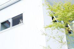 4世代7人と猫5匹が暮らす「木の家」 | 入居者インタビュー | みんなで考える住まいのかたち | MUJI HOUSE VISION