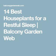 14 Best Houseplants for a Restful Sleep | Balcony Garden Web