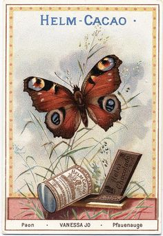 Helm Cocoa.   Butterfly trade card series.