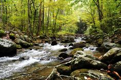 Great Smokey Mts. TN....one of the most relaxing places on Earth.