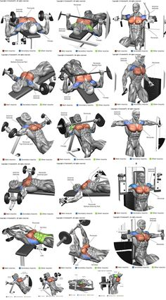 How To Get The Best Chest Workout is part of Chest workouts - Heavy compound exercises are known as one of the main exercises for gaining muscle mass and they should be included in your chest training There are a lot of opinions Fitness Workouts, Weight Training Workouts, Gym Workout Tips, At Home Workouts, Body Training, Strength Training, Gym Workouts For Men, Fitness Foods, Men Exercise