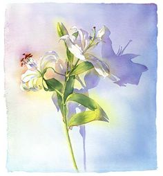 Lily Flower Watercolor Painting M Najaka