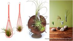 23 Exceptionally Beautiful Air Plant Holder Ideas to Collect Inside Plants, Cool Plants, Air Plants, Indoor Plants, Air Plant Display, Plant Decor, Shabby Chic Bedrooms, Shabby Chic Decor, Japanese Plants