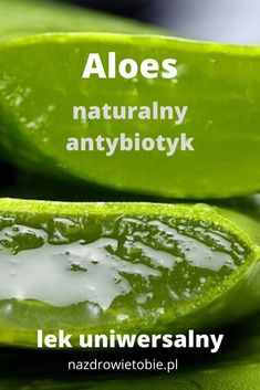 Aloes – lek uniwersalny, jeden z najpopularniejszych naturalnych antybiotyków Health Eating, Good Advice, Aloe Vera, Health And Beauty, Cucumber, Herbalism, Avocado, Healthy Living, Food And Drink