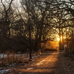 Country road at golden hour (Sweden) by Wilda Kristiansson