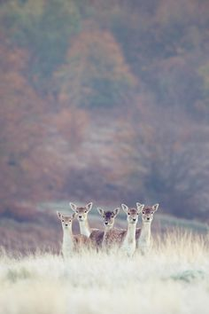 wild | Mark Bridger//