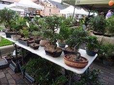 Bonsai Spring Fever, Winter Garden, Bonsai, Bloom, Patio, Outdoor Decor, Plants, Home Decor, Decoration Home