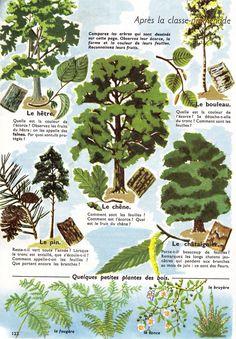 La forêt Basic French Words, Medical Mnemonics, Drawing S, Explore, Nature, Plants, Barbecue, Islam, Manga