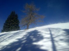 Malga Cere - Lagorai Valsugana #valsugana #trentino #winter
