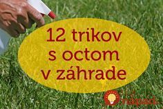 12 úžasných využití octu v záhrade, o ktorých ste zrejme ešte nepočuli. Picnic Blanket, Outdoor Blanket, Weed Killer, Planting Vegetables, Garden Boxes, Kids And Parenting, Beautiful Gardens, Gardening Tips, Outdoor Gardens