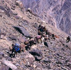Mule train, NWFP, Pakistan Pakistan, Grand Canyon, My Photos, Train, Explore, Nature, Grand Canyon National Park, Nature Illustration, Off Grid