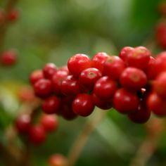 B&B es - Producción de café de Colombia ha regresado a altos niveles