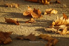 autumn leaves / sanfte landung by nadine schumacher