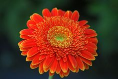 Week 17: Marco Weening just won #picoftheweek at www.tsu.co/flowerpictures Could you do better?  Would you like to see the other images on the most popular gallery on TSU for photographers, artists and lovers of flowers? Find out more information here:  www.aboynamedtsu.com #flowers #nature #photography #gallery #tsu #artist