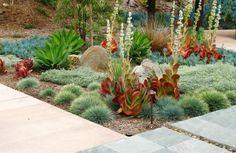 succulents - artistic contrast of color, texture, & shape