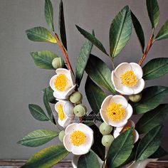 Tea Plant in a Teapot - Quilling Paper Flowers Quilling Flowers, Quilling Designs, Paper Quilling, Paper Flowers, Quilling Ideas, Paper Art, Paper Crafts, Tea Plant, Fruit Plants