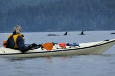 kayaking with the Orcas...bucket list!  my husband thinks I am insane