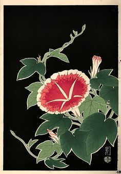 Pink Morning Glory - Unknown Artist (Japanese) 1950    1950