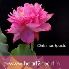 Send flowers on this Christmas.  #flowers #bouquets #christmas #heart2heart #specialoffer #santaclaus
