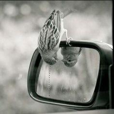 Spatz im Spiegel