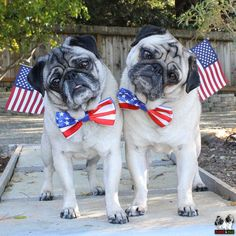 ❤ Minnie and Max wish everyone a happy and safe Memorial Day ❤ Posted on Minnie & Max the Pugs