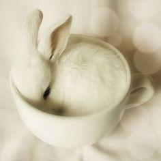 Blanc lapin dans le tasse.