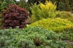 Image result for Bushes, Shrubs and Plants Forest
