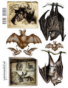 "Bat halloween Decoration images Vintage Goth Digital collage sheet Scrapbooking Decoupage Book scan Download printable 8.5""x11"" /ba004. $3.00, via Etsy."