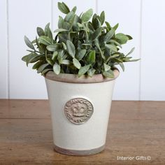 Kew Long Tom Pot in Ivory Cream - Royal Botanic Gardens Plant Pot - Small, stunning handmade and hand glazed pots from www.interiorgifts.co.uk