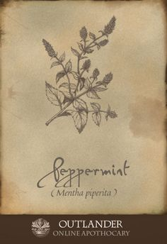 Peppermint. Used in the 18th century for easing cramps and tension, this herb was also a good anti-nausea preparation. Also, Pliny called it a powerful aphrodisiac. #Outlander #ApothecaryCabinet