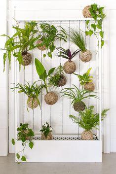 green walls - plants #kokedamas