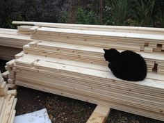 The cat guarding the new shed