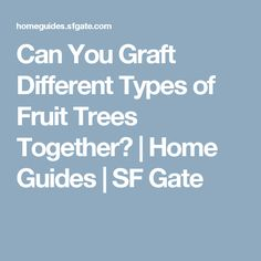 Can You Graft Different Types of Fruit Trees Together?   Home Guides   SF Gate